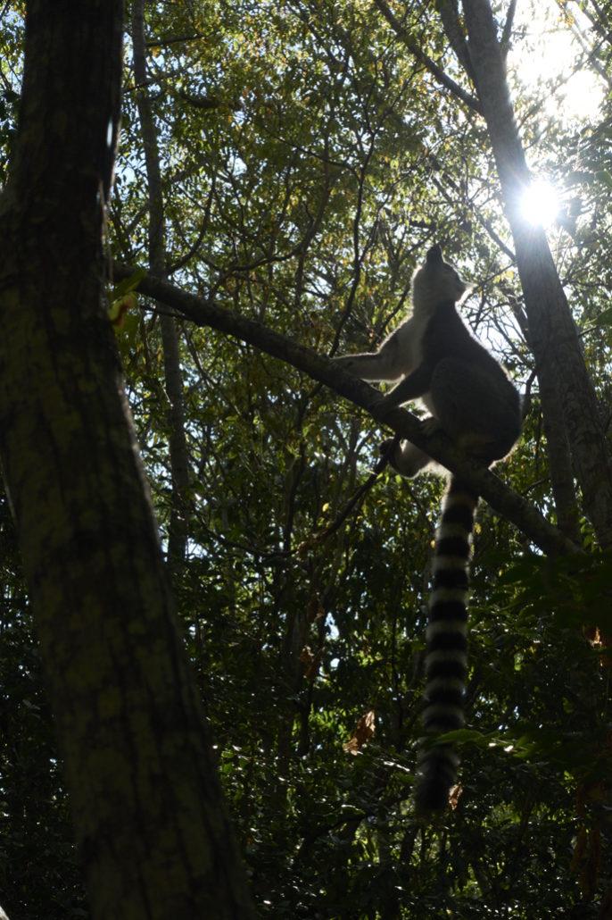 Madagaskar - Reise